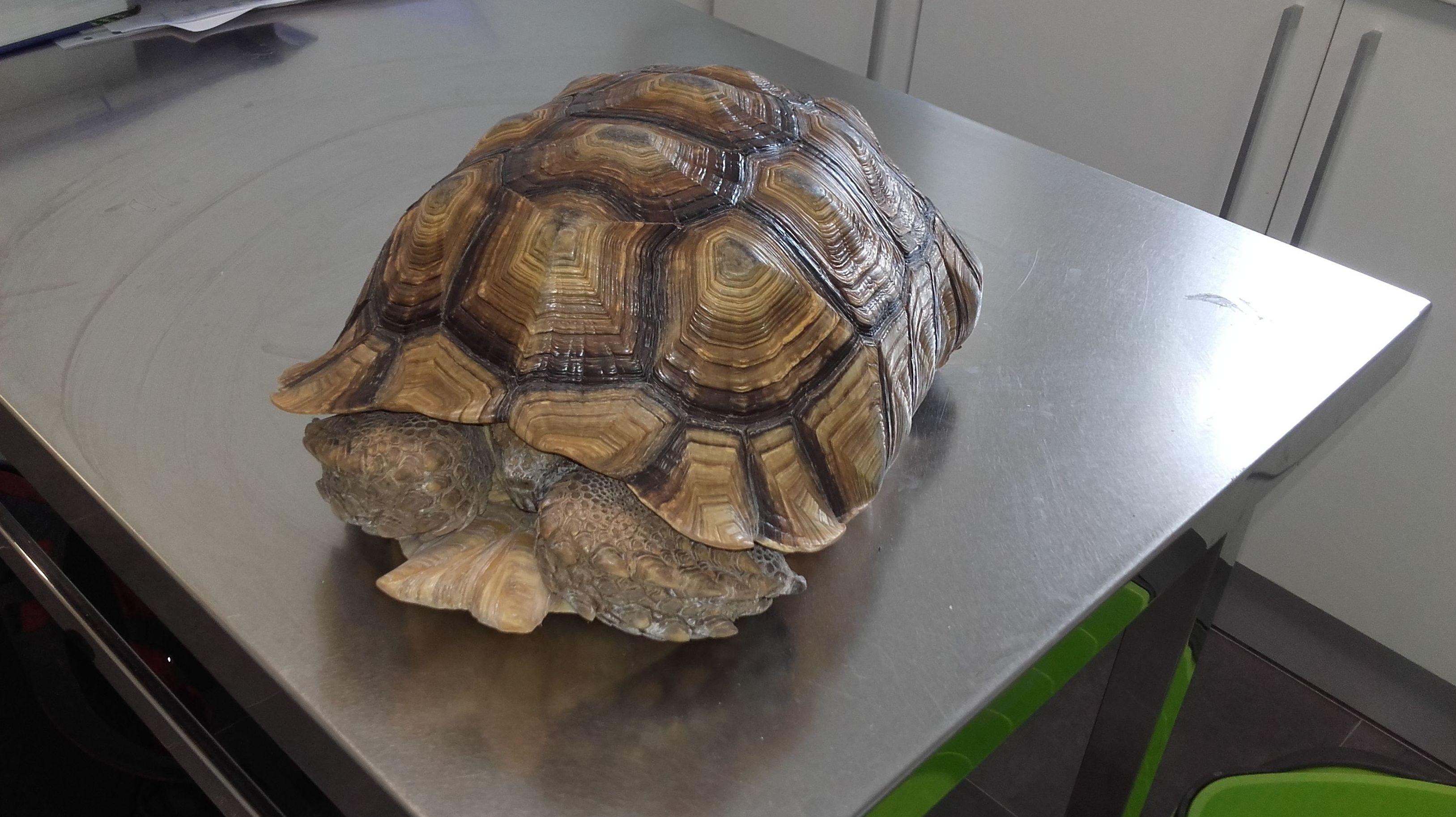 Clinca veterinaria Reptiles tortugas