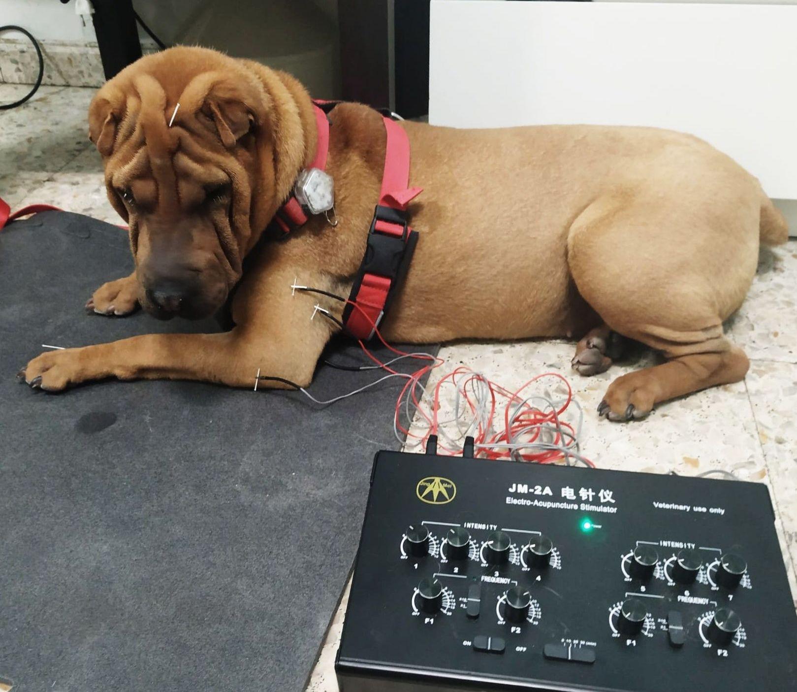 Hilda tratada con electroacupuntura tras cirugia codo.
