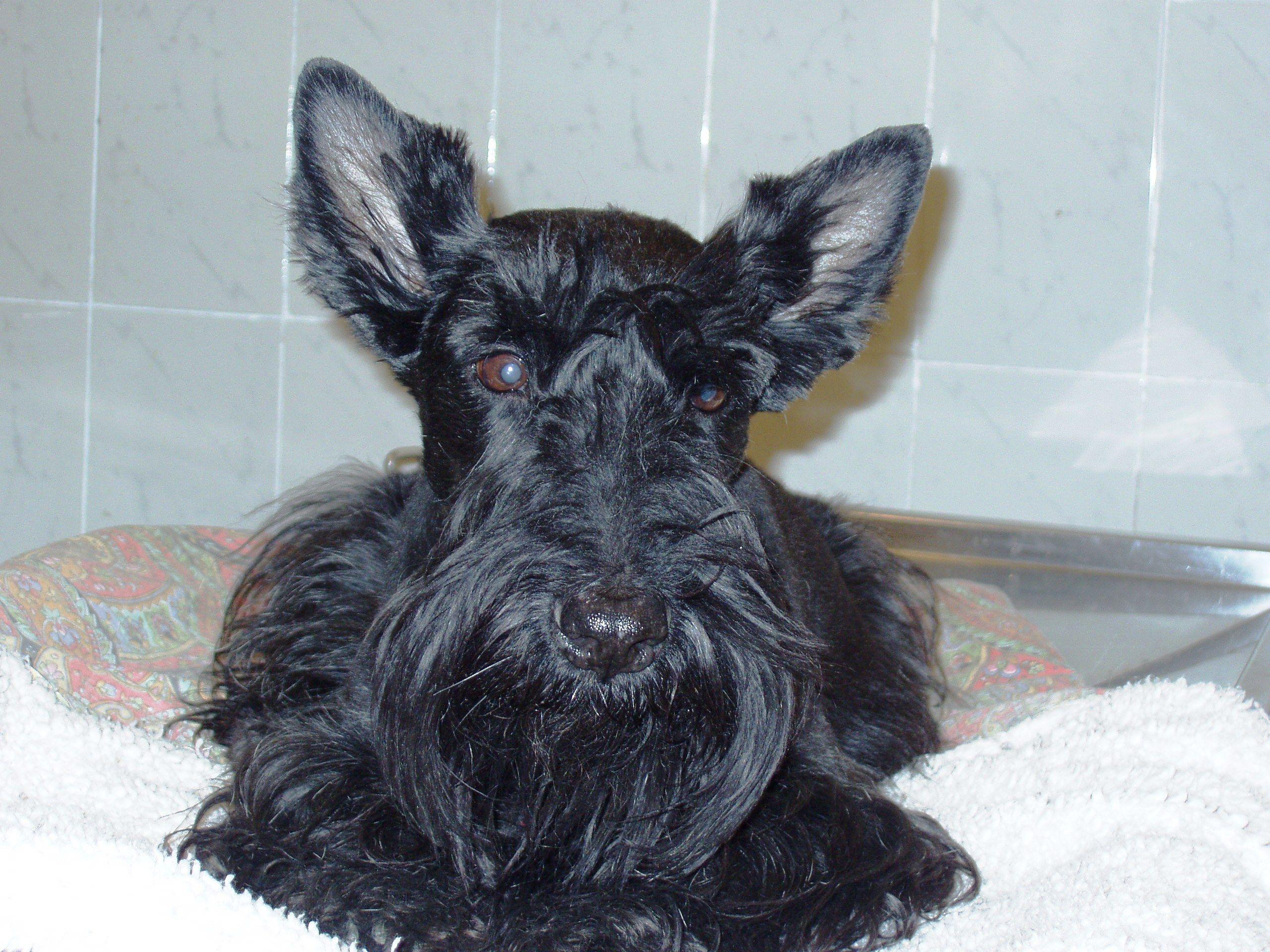 Foto 12 de Clínica veterinaria en  | Clínica Veterinaria Dog And Cat