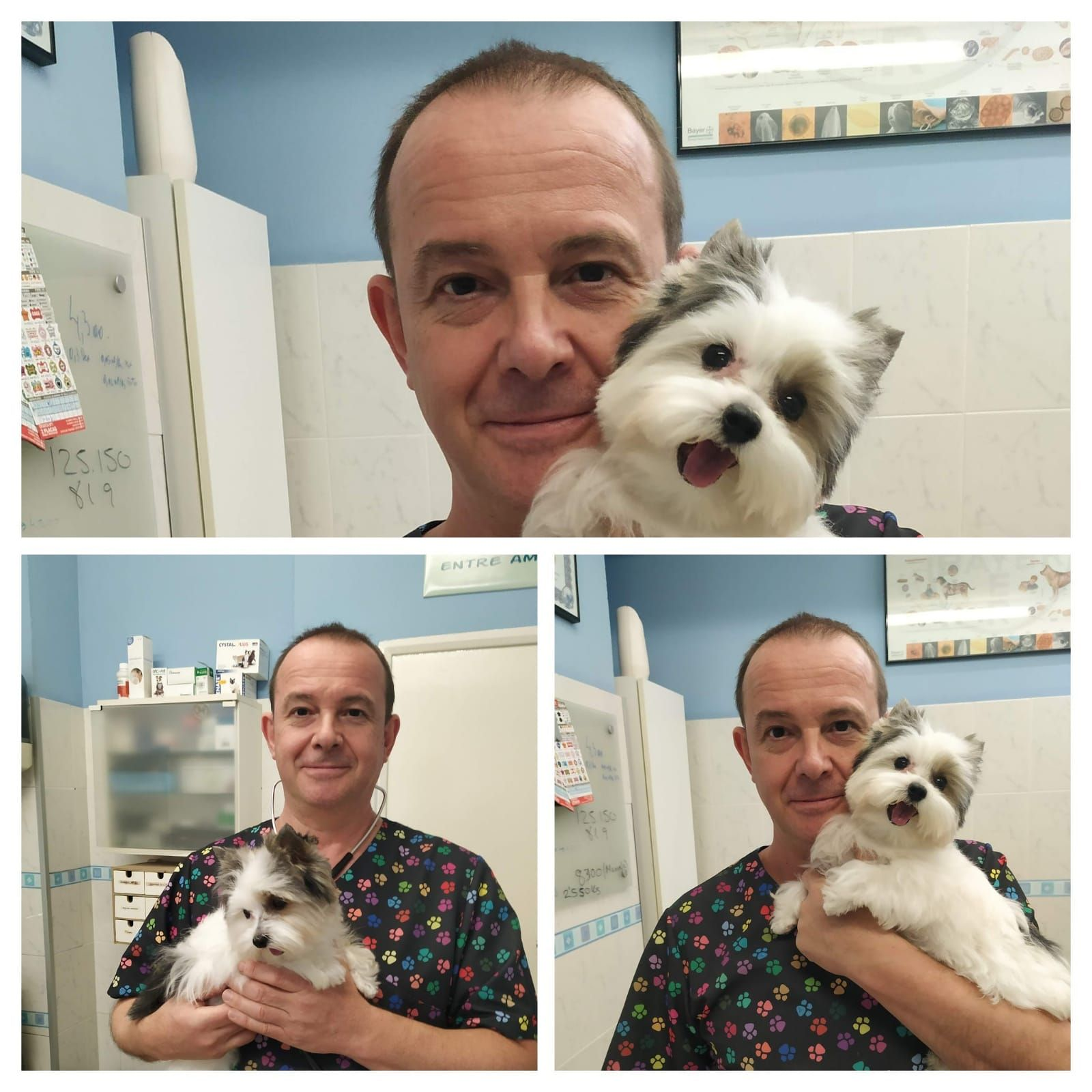 Foto 16 de Clínica veterinaria en    Clínica Veterinaria Dog And Cat