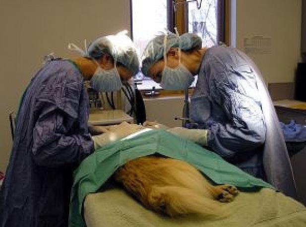 Cirugía: Servicios de Clínica Veterinaria Ntra. Sra. De Begoña