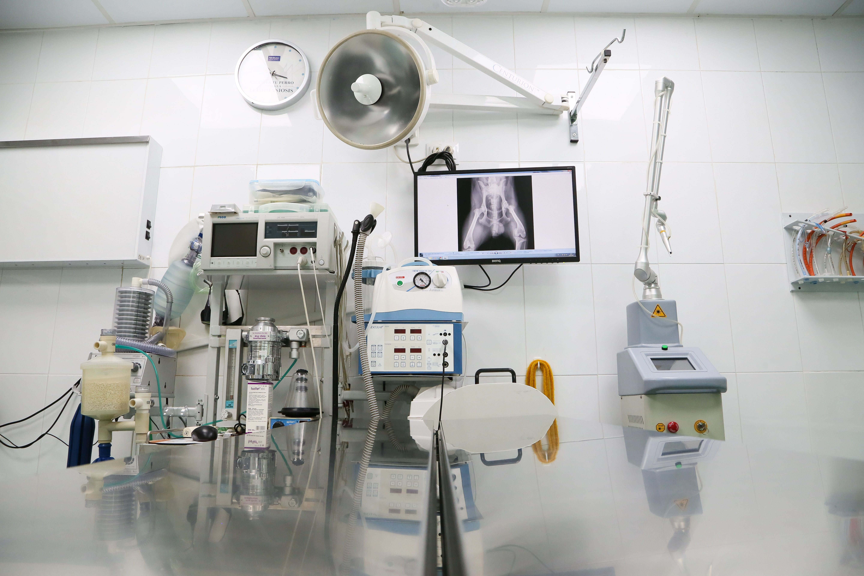 Radiología digital: Servicios de Clínica Veterinaria Ntra. Sra. De Begoña