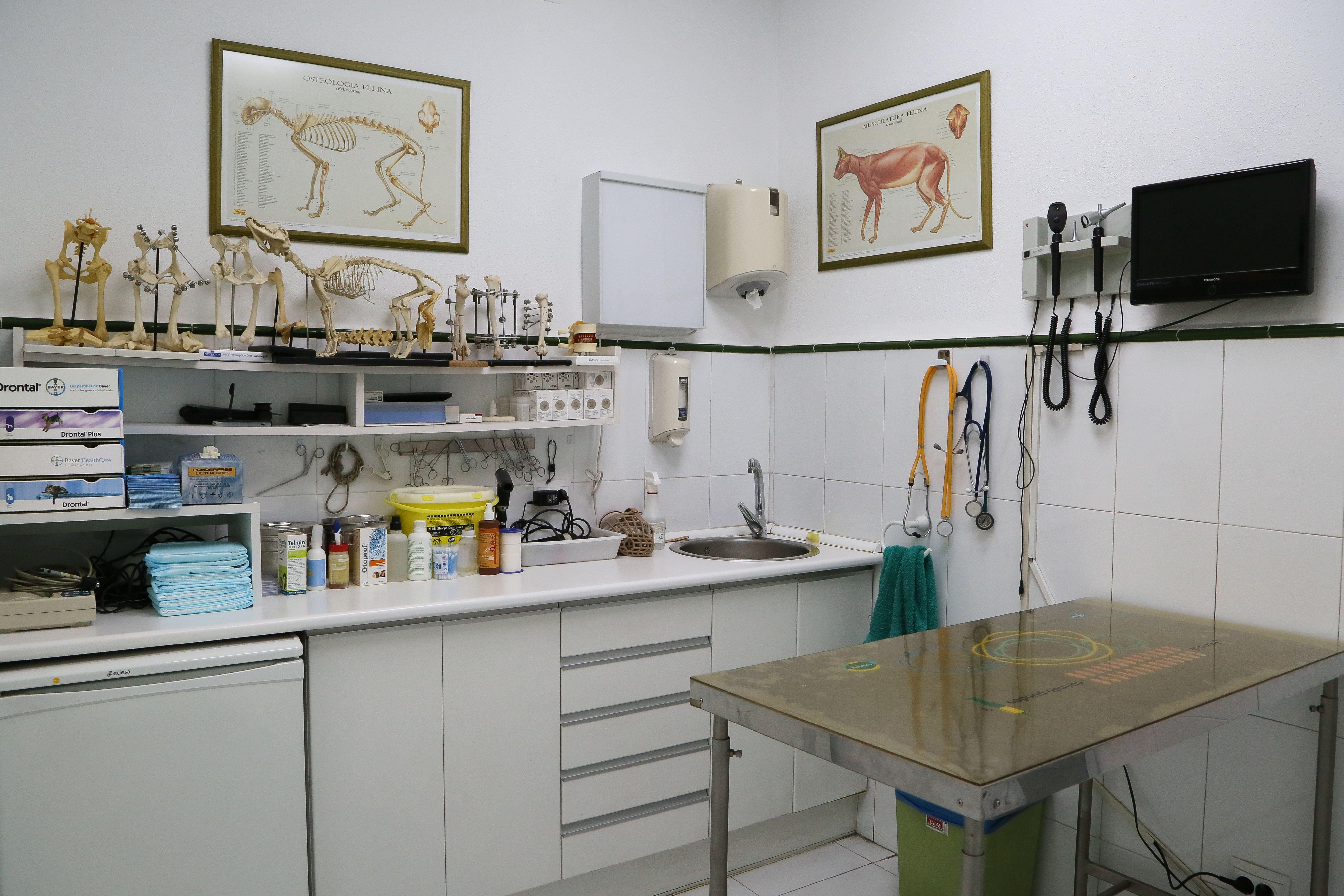 Medicina general: Servicios de Clínica Veterinaria Ntra. Sra. De Begoña
