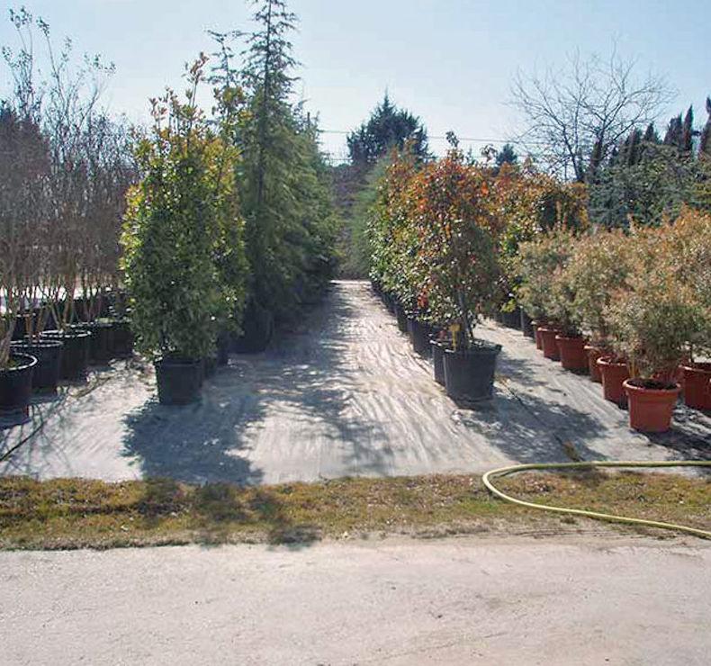 Empresa de mantenimiento de jardines en Navalcarnero, Madrid