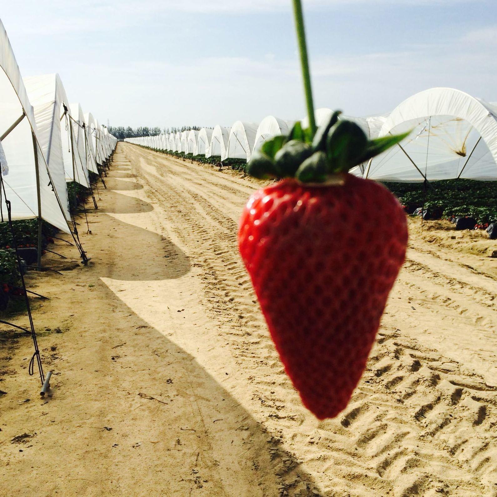 Foto 10 de Producción de frutas en Murcia | Frutas Maripí