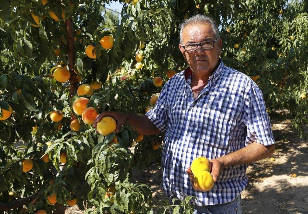 Foto 5 de Producción de frutas en Murcia | Frutas Maripí