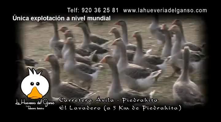 COMENZÓ LA TEMPORADA. }}