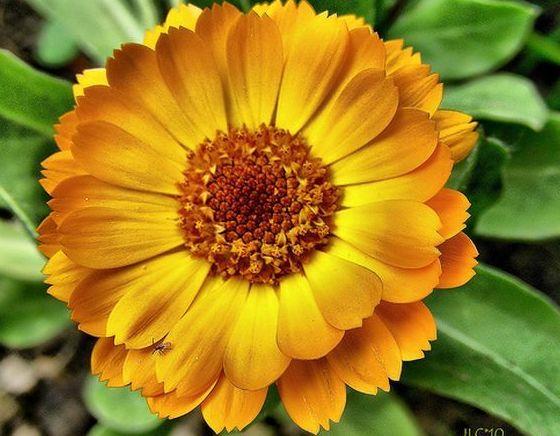 Herbolario: Productos y servicios de Herbodietética Onagra
