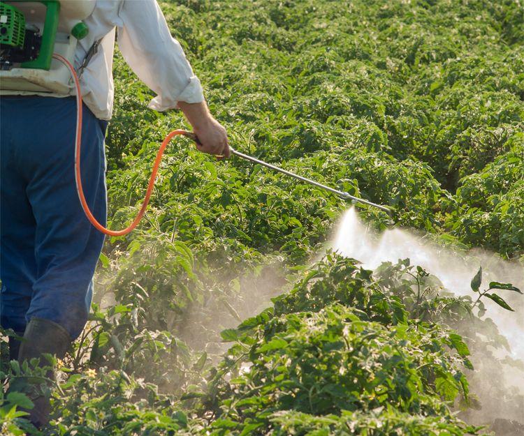 Asesoramiento fitosanitario en plantaciones