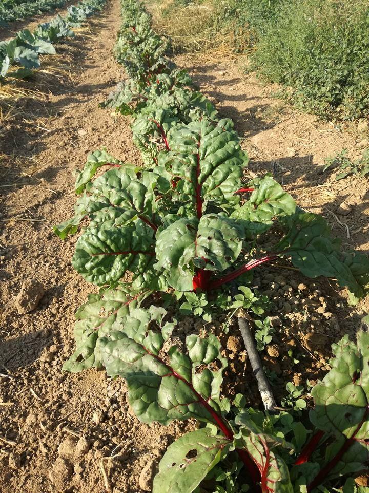 Comprar verdura ecológica en Latina