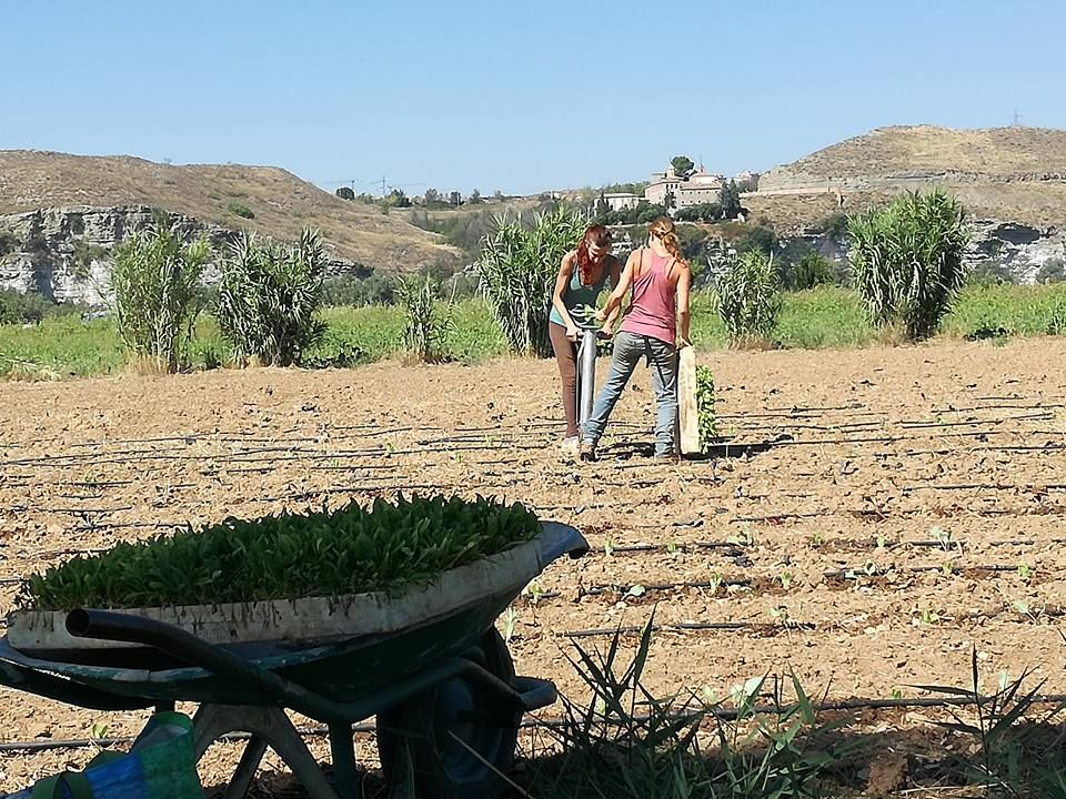 Agricultura ecológica en Latina