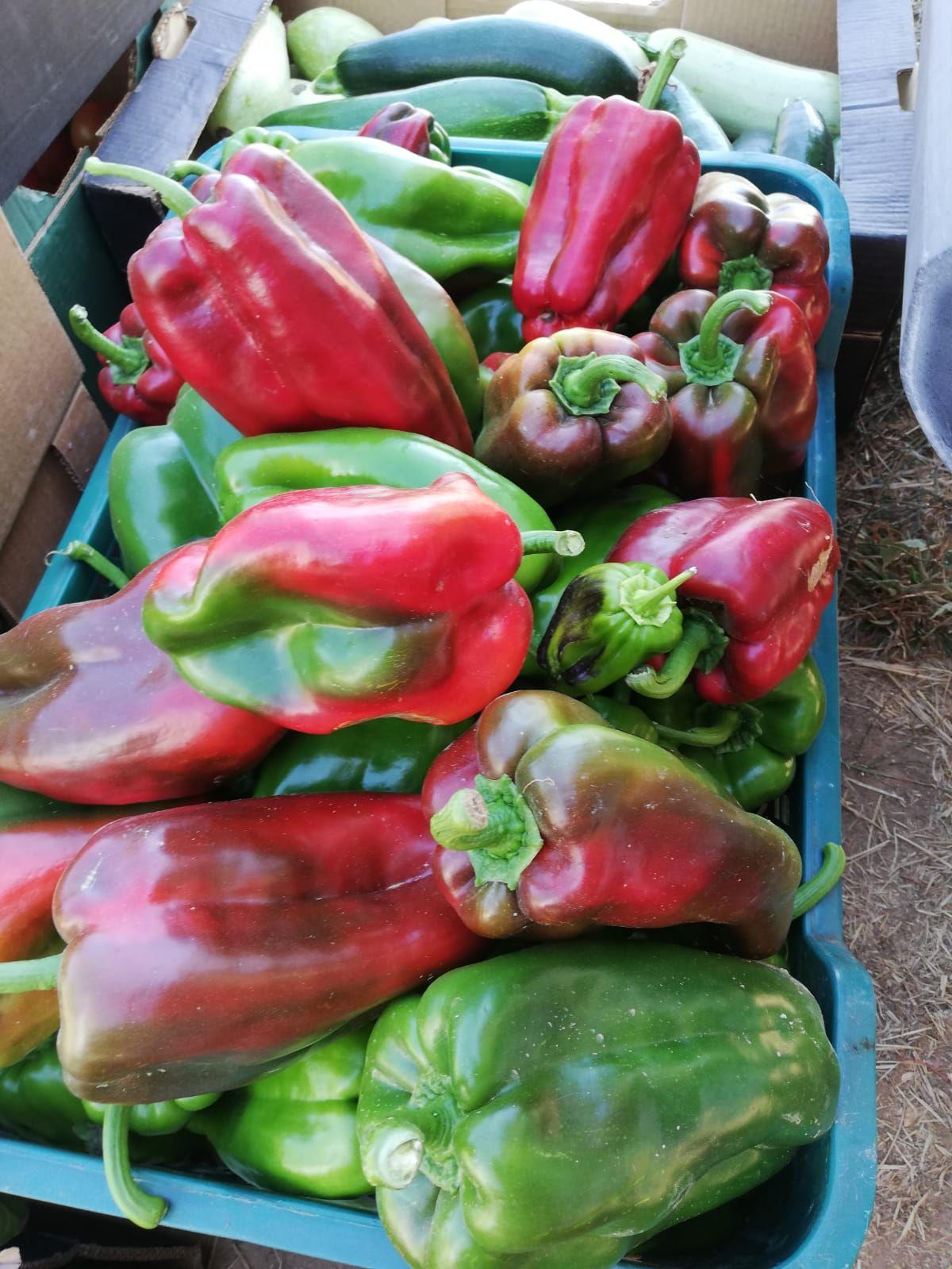 Pimiento: Productos de La Huerta de Leo