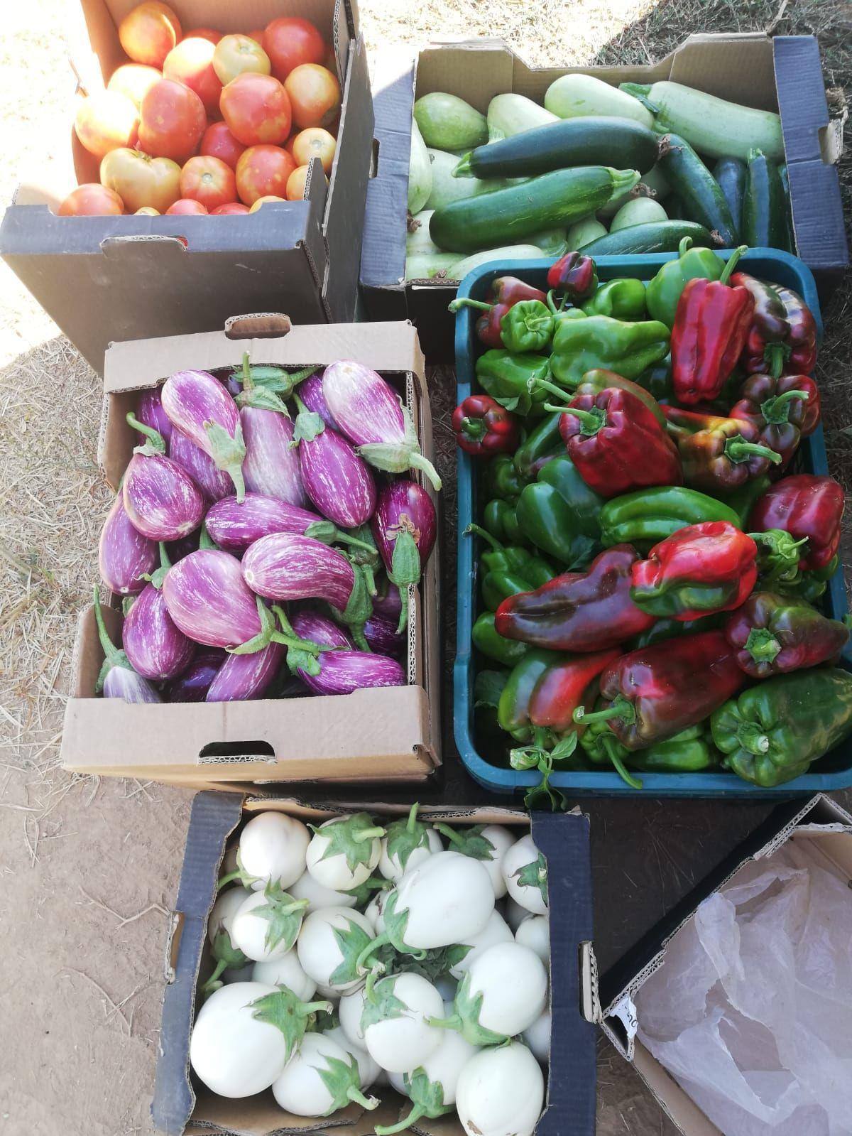 Fruta y verdura ecológica en Velilla de San Antonio, Madrid