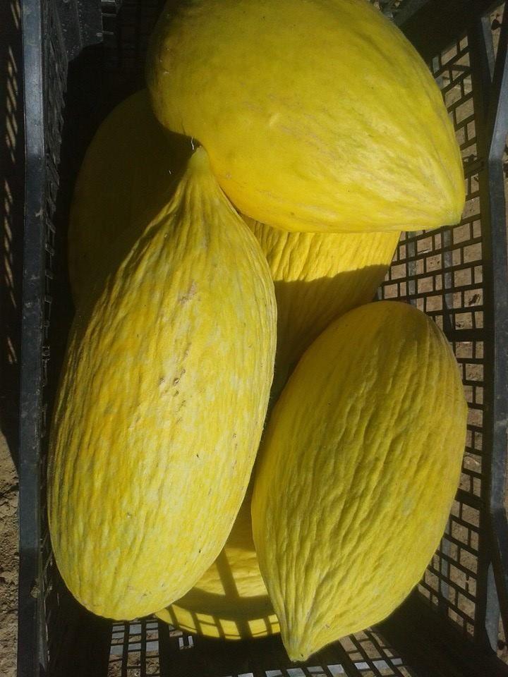 Comprar verdura y fruta ecológica en Latina