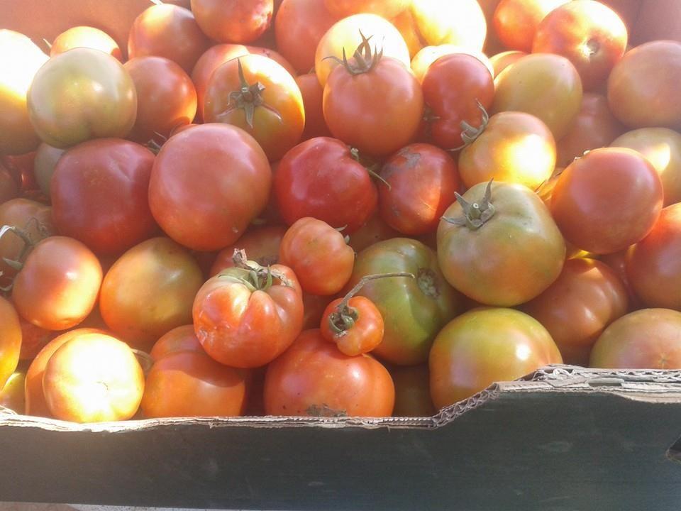 Comprar verdura ecológica de temporada en Latina
