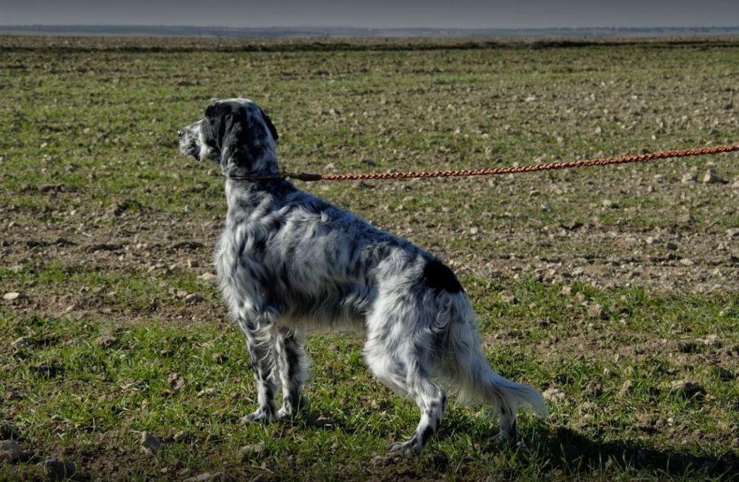 Residencia canina en Getxo