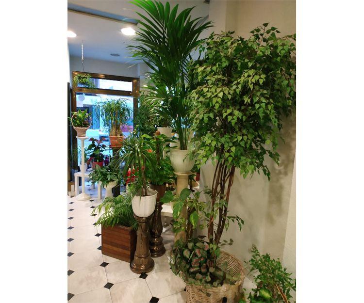 Plantas de interior y exterior en Madrid