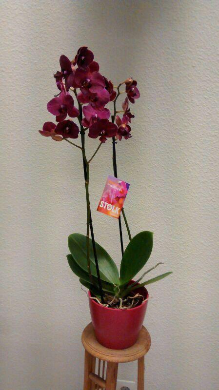 Flores exóticas naturales