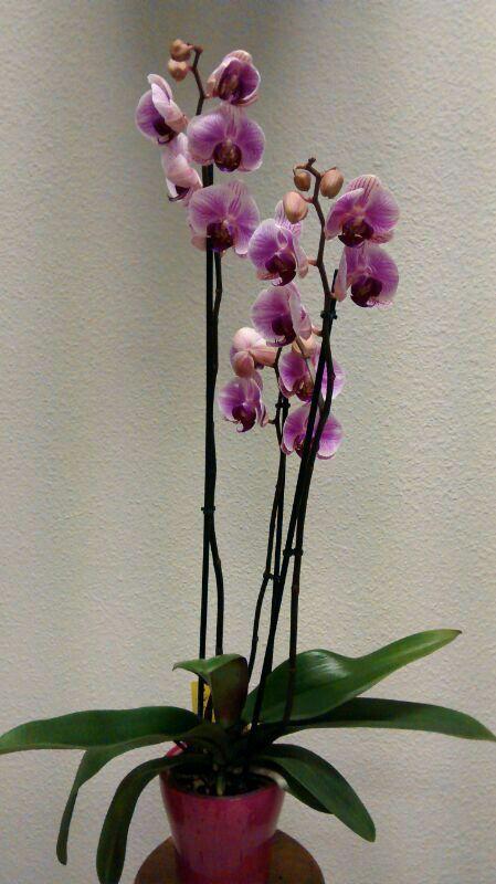 Servicio de flores a domicilio