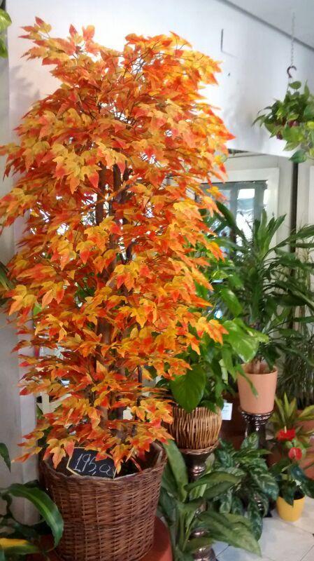 Plantas y árboles ornamentales