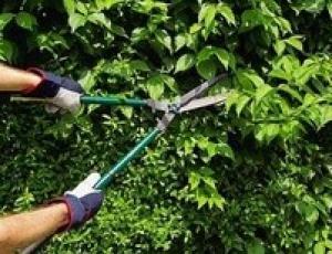 Limpieza de jardines: Servicios de Altejada