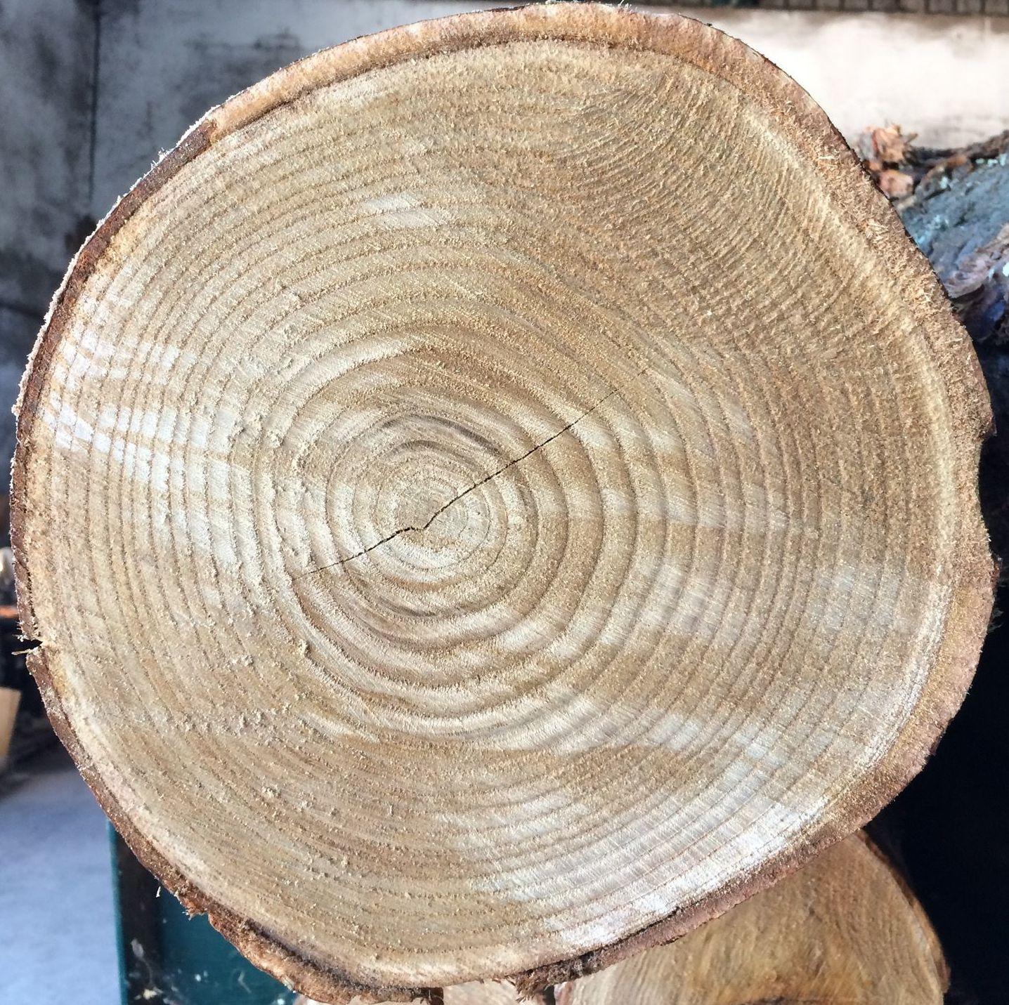 Los anillos indican la edad del árbol