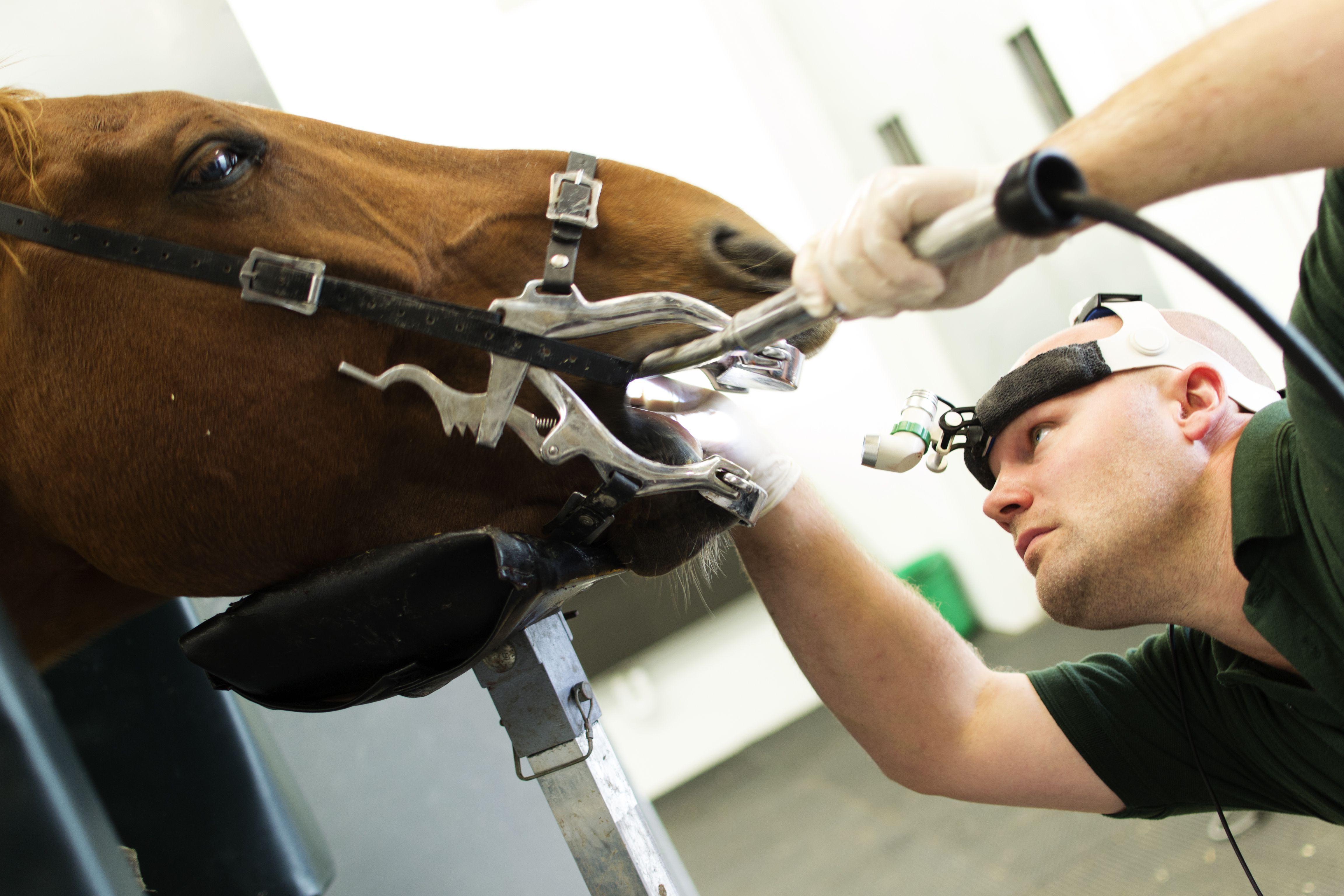Clínica veterinaria con especialistas en odontología en Madrid