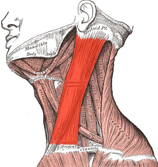 Cirugía del mentón: Servicios de Clínica Dr. Javier Cerqueiro Cirugía Plástica