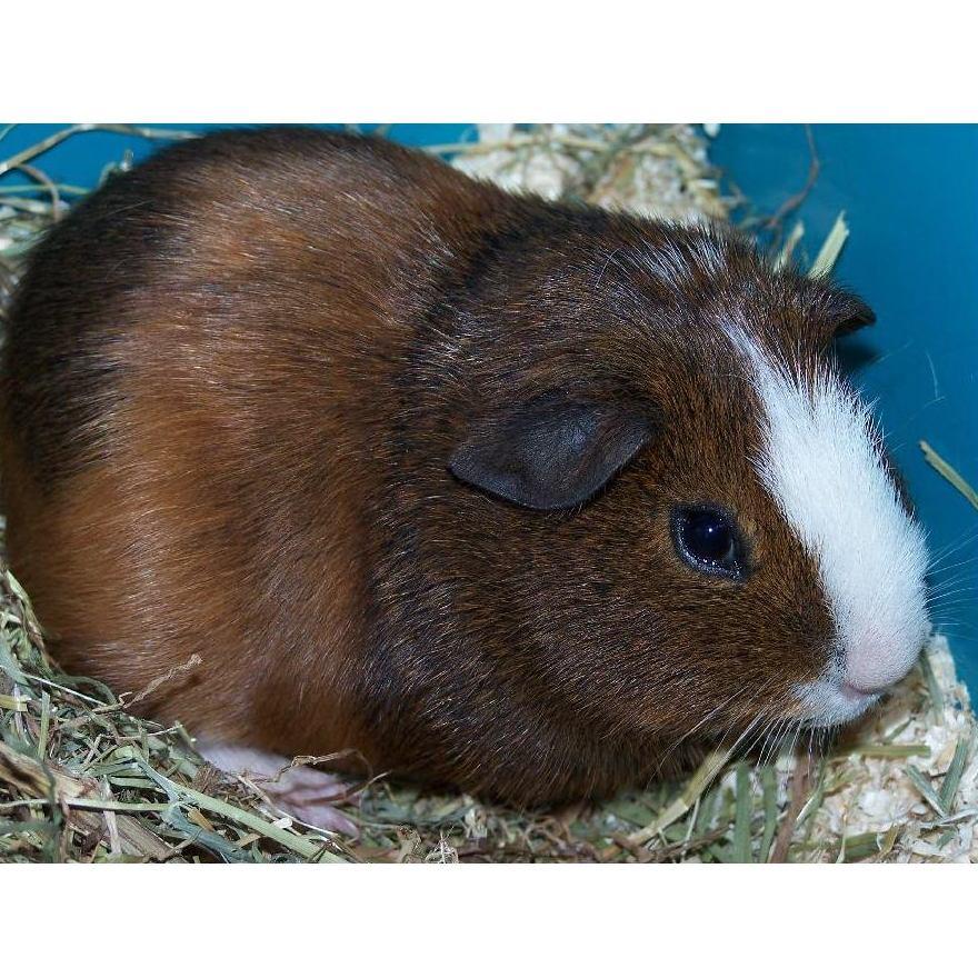 Pequeños mamíferos: Productos de Aquarama