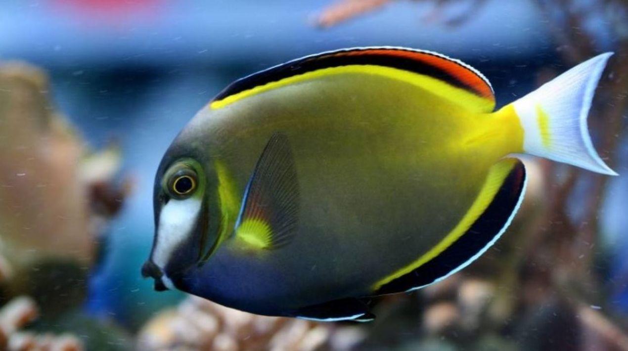 Aquariofilia marina: Productos de Aquarama
