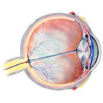 Acupuntura para tratar la retinosis pigmentaria: Servicios de Acupuntura Boadilla