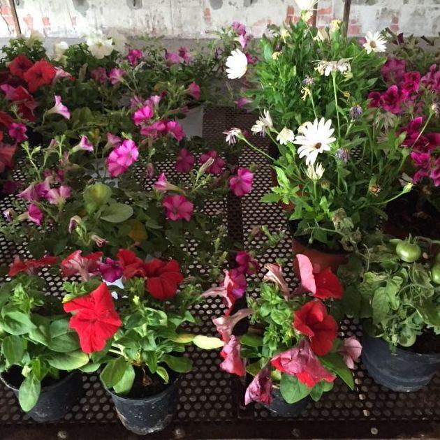 Venta de plantas y flores