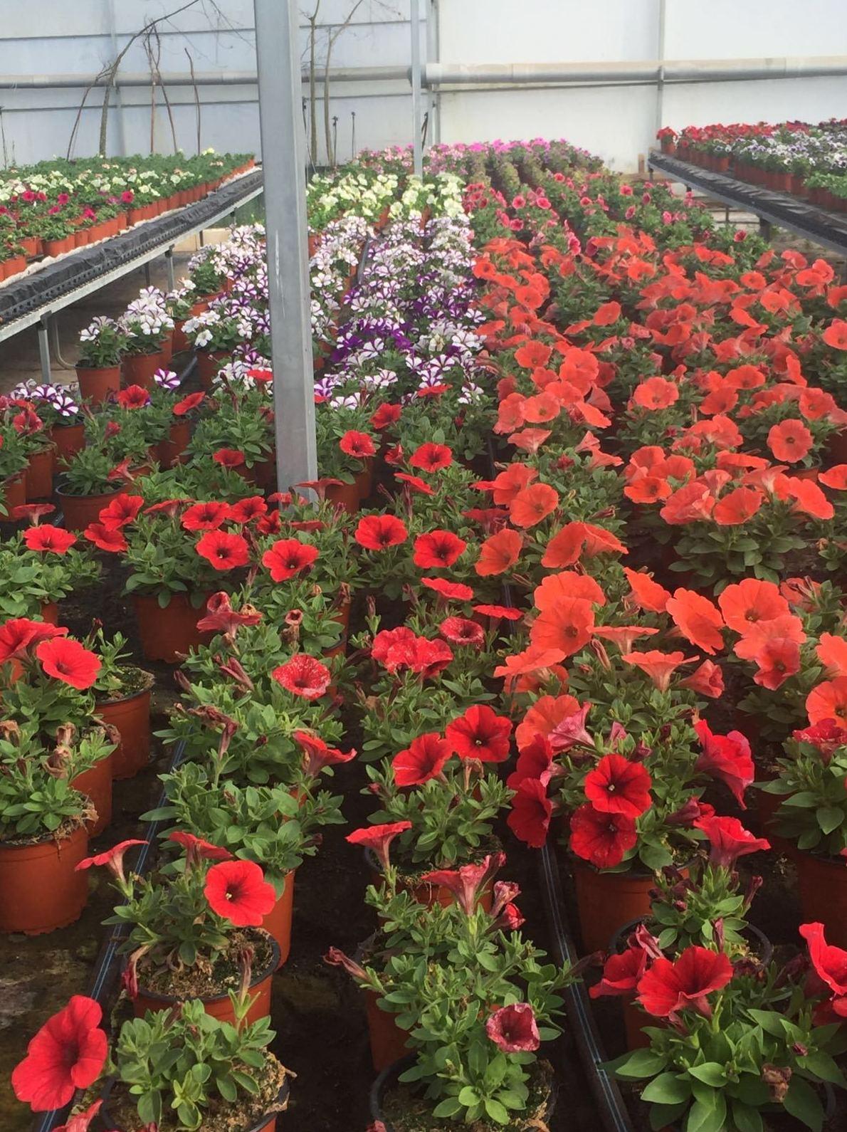 Vivero de plantas en Segovia