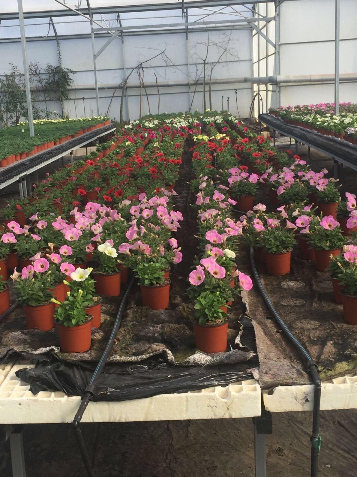 Plantas de interior y exterior