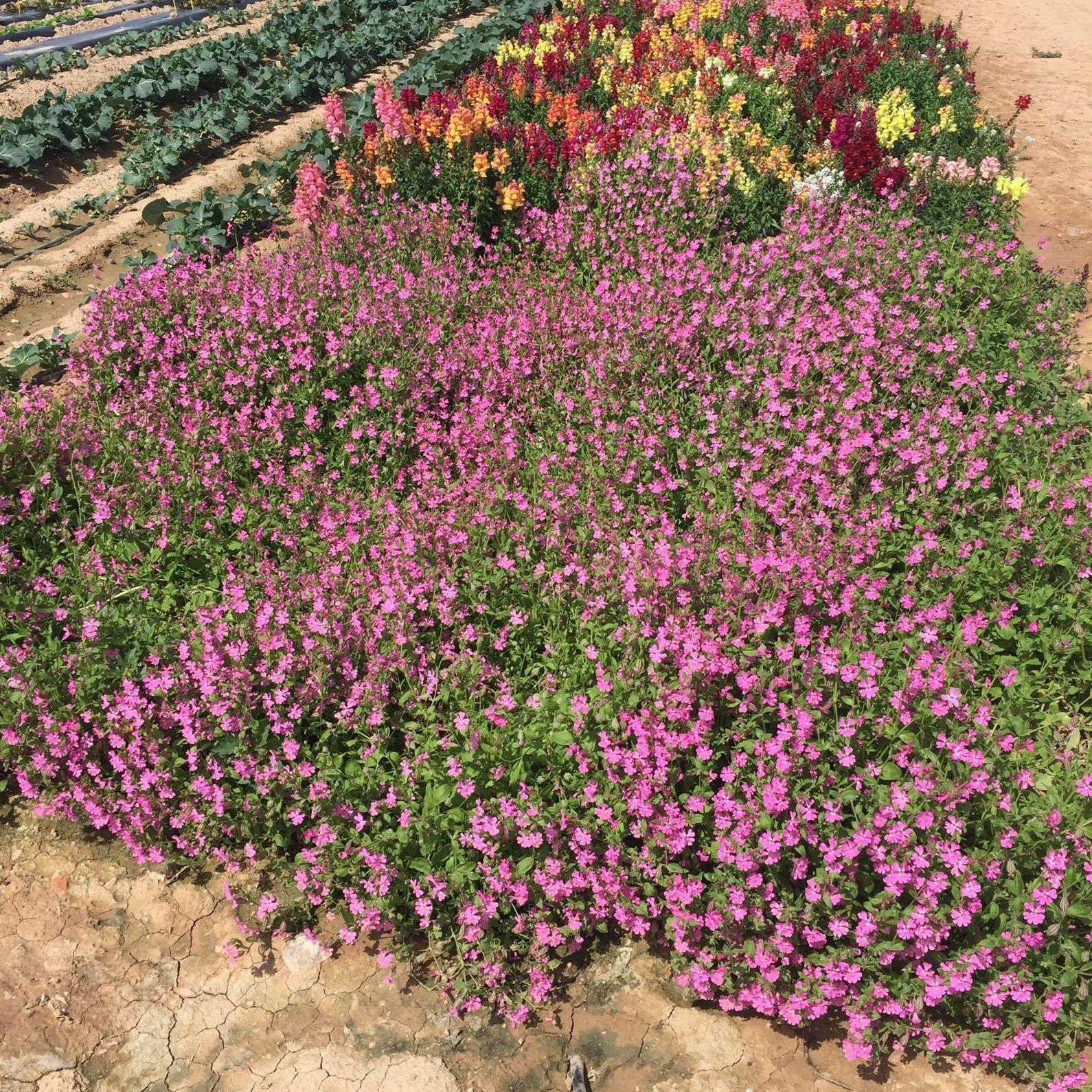 Venta de plantas vivas Segovia