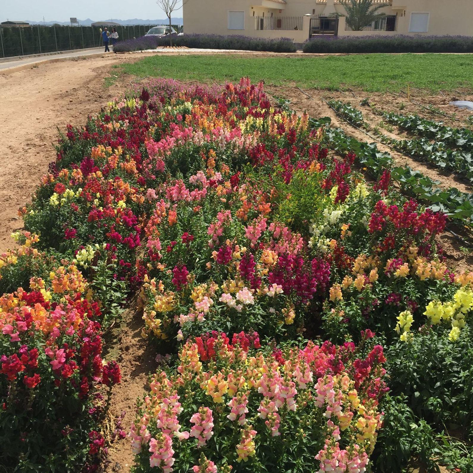Venta de semillas y plantas