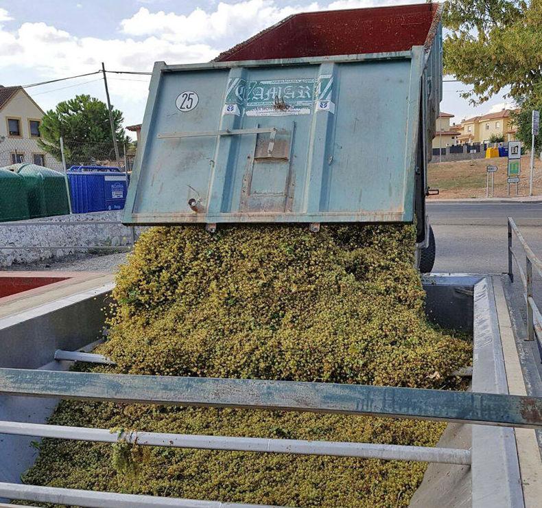 Descargar la uva, una de las principales fases para elaborar el vino