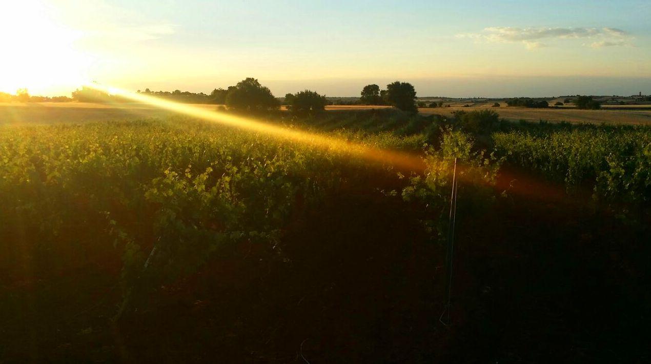 Foto 1 de Venta de vinos con denominación de origen Mondejar en Mondéjar | Bodegas Mariscal