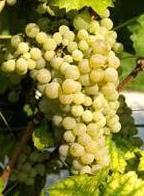 Foto 30 de Venta de vinos con denominación de origen Mondejar en Mondéjar | Bodegas Mariscal
