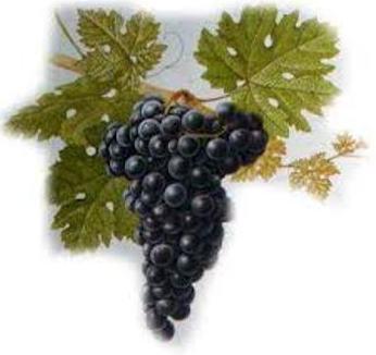 Foto 26 de Venta de vinos con denominación de origen Mondejar en Mondéjar | Bodegas Mariscal