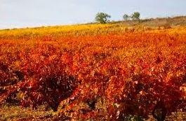 Foto 25 de Venta de vinos con denominación de origen Mondejar en Mondéjar | Bodegas Mariscal