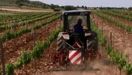 Trabajos en la viña: El arado