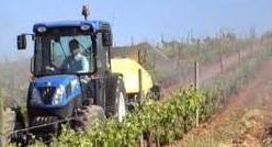 Trabajos en la viña: control de plagas y enfermedades