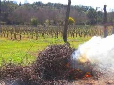 Trabajos en la viña: La poda (III)
