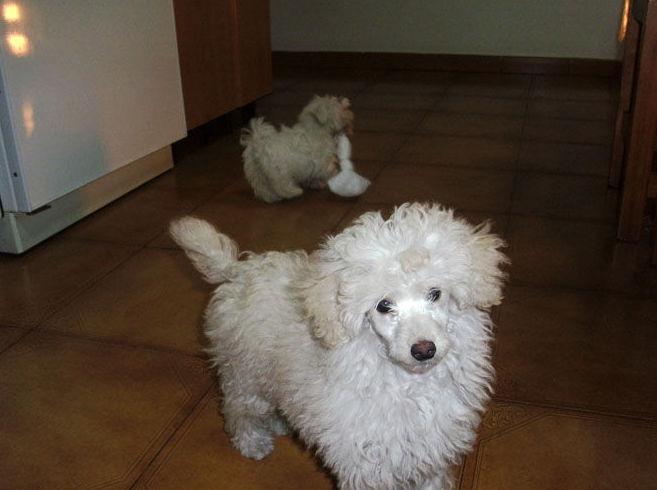 Hotel para mascotas en Vizcaya