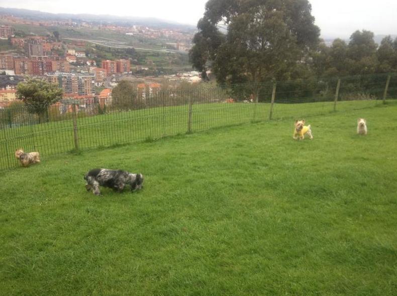 Amplios terrenos para sus mascotas