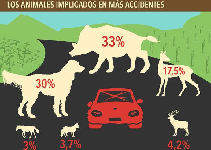 animales implicados en accidentes de trafico