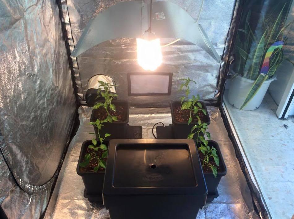 Iluminación y ventilación: Servicios de The Grow House