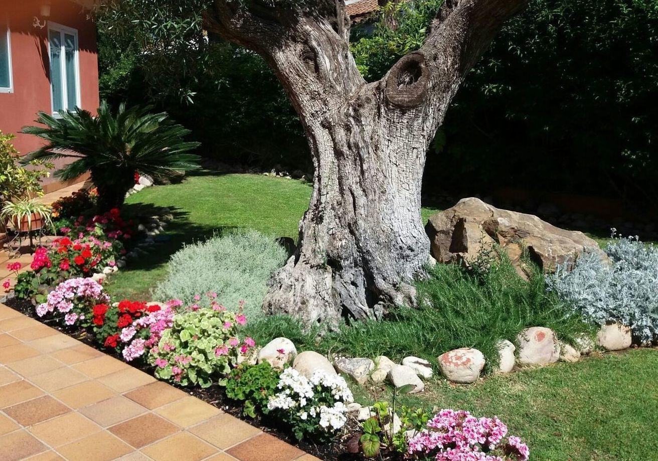 Especializados en:: Servicios de Jardinería Salva