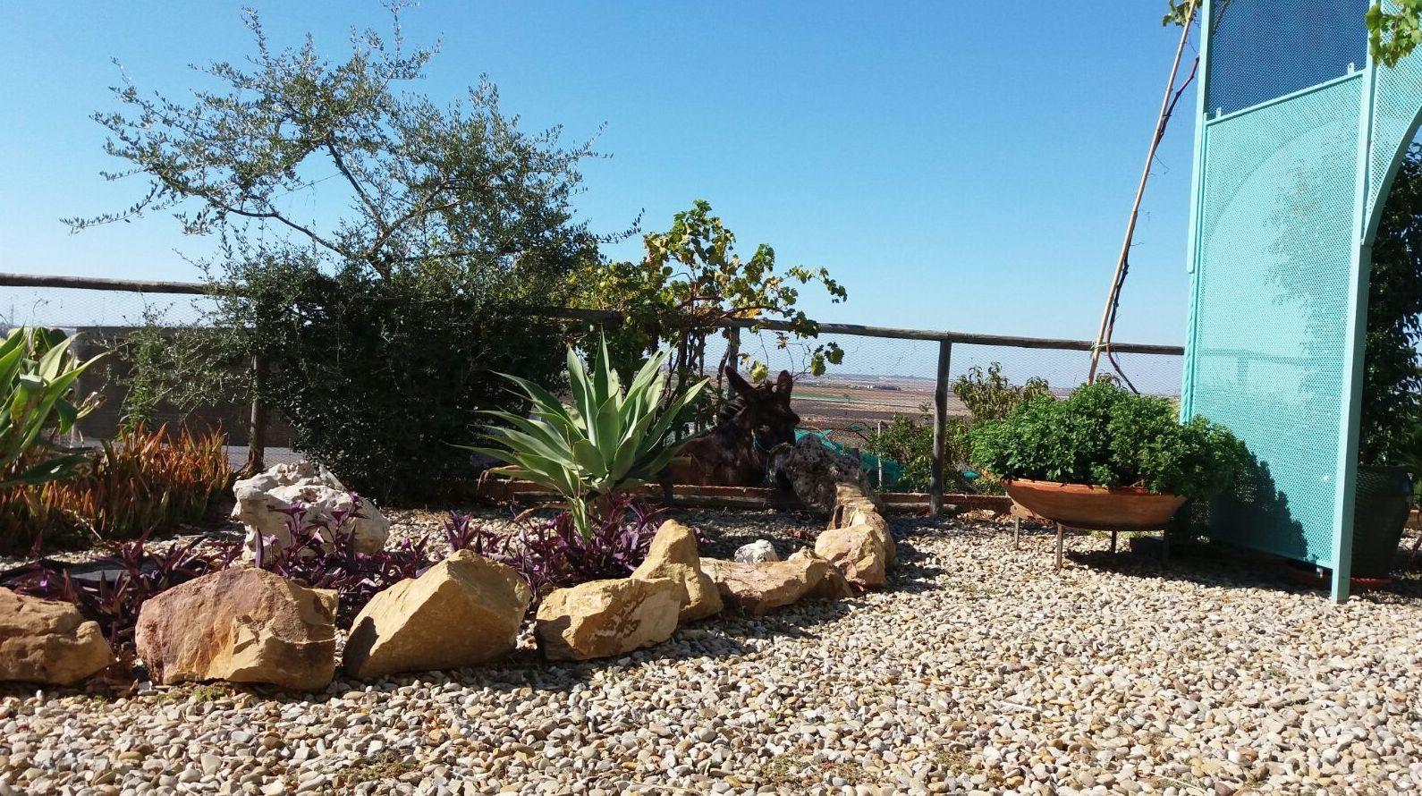 Mantenimiento de Jardines en Cadiz